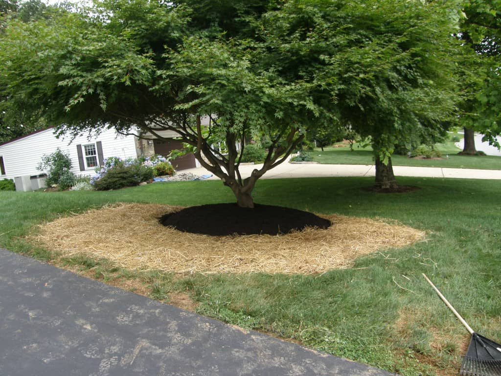 Pruning with Mulch Masters after example 1