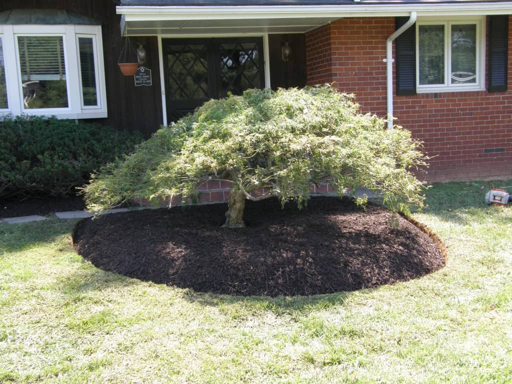 Pruning with Mulch Masters after example 2
