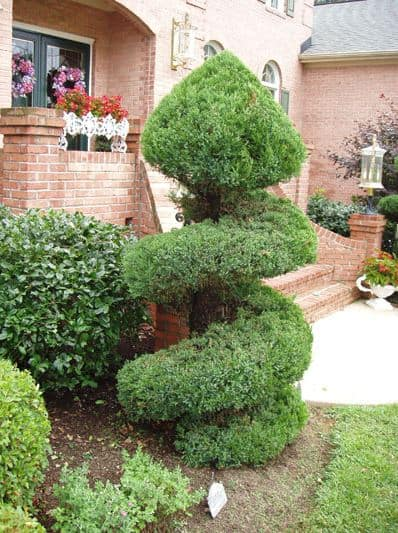 Topiary Trimming with Mulch Masters after example 3